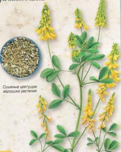 трава донник лекарственный