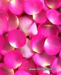 лепестки шиповника (розы)